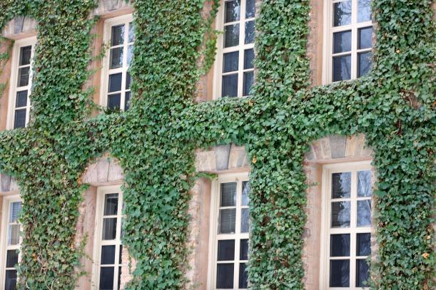 princeton ivy