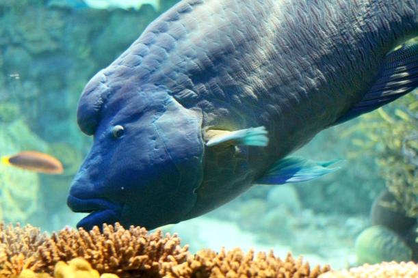 national aquarium baltimore