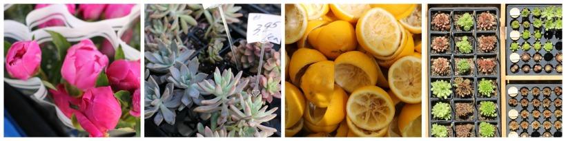 rittenhouse farmers market