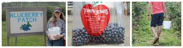 blueberry picking terhune orchard